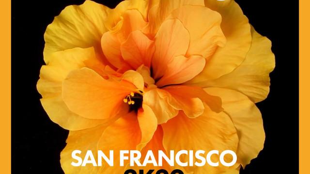 Mr.Da-Nos – San Francisco 2K20